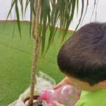 Actividad infantil sobre las plantas